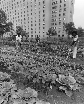 Taylor,_Vegetable_Garden,_1981